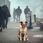 Проблема бездомных животных в Бессарабке: жители обеспокоены!