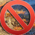 В Молдове сжигание травы приносит живой природе серьёзные проблемы