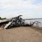 На Филиппинах погиб кит: в его желудке нашли 40 кг пластиковых пакетов
