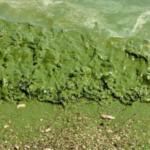 К сведению отпускников: в Одессе и Одесской области наблюдается окрашивание  морской воды из-за ядовитых веществ