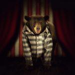 Цирки без животных. 45 стран запретили варварские развлечения.