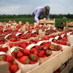 Италия намерена привлечь граждан Молдовы на сезонную работу.