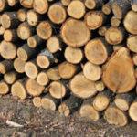 В Молдове подорожали дрова на 3-5%